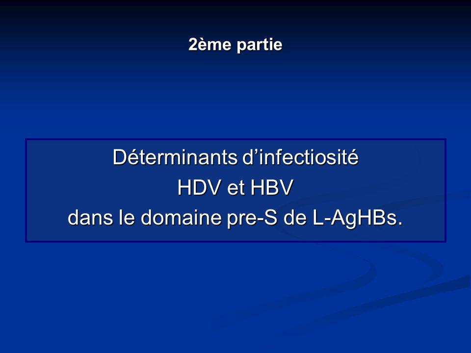 Déterminants d'infectiosité HDV et HBV