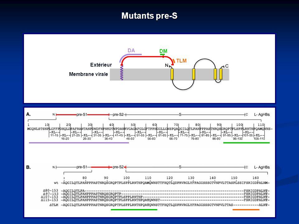 Mutants pre-S DA DM TLM Extérieur Membrane virale