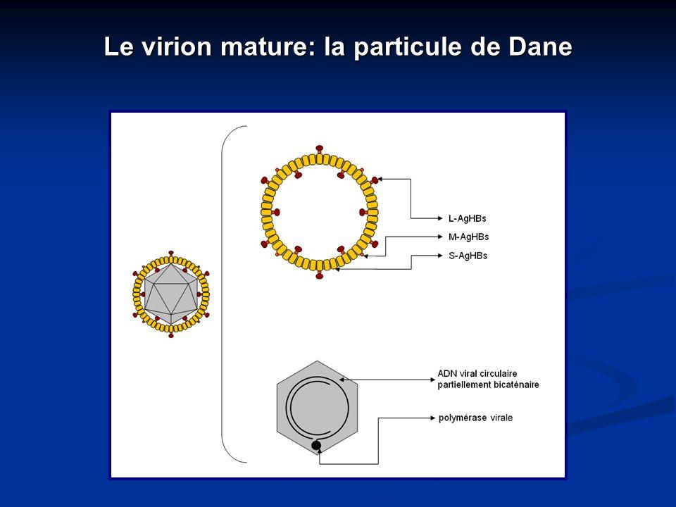 Le virion mature: la particule de Dane