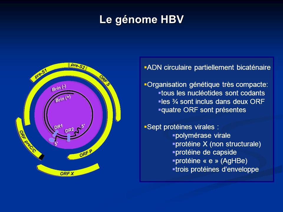 Le génome HBV ADN circulaire partiellement bicaténaire