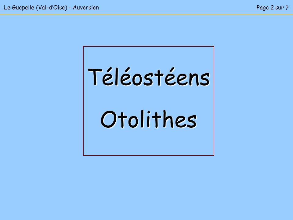 Téléostéens Otolithes Le Guepelle (Val-d'Oise) - Auversien