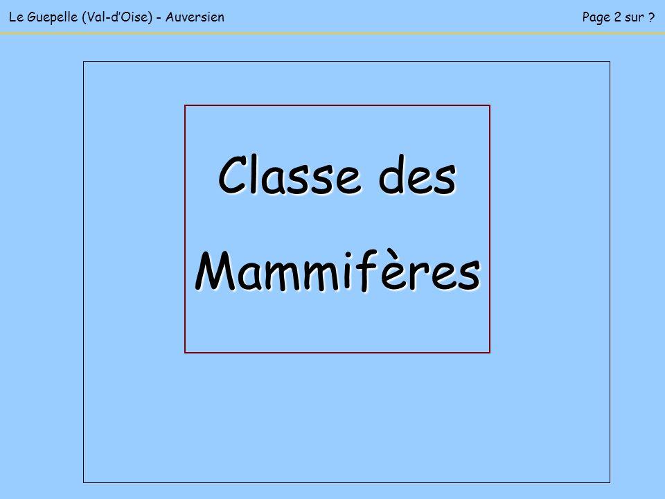 Classe des Mammifères Le Guepelle (Val-d'Oise) - Auversien
