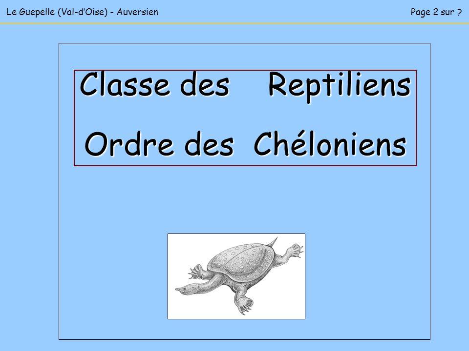Classe des Reptiliens Ordre des Chéloniens