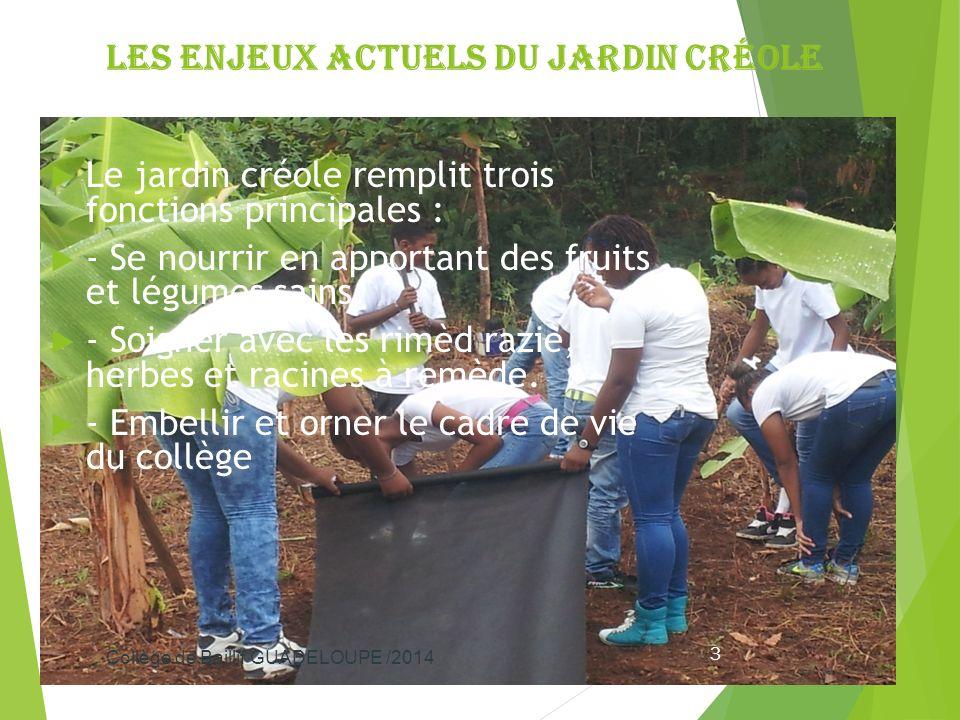 Les enjeux actuels du jardin créole