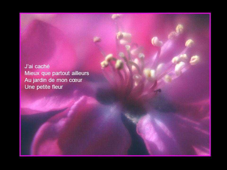 J'ai caché Mieux que partout ailleurs Au jardin de mon cœur Une petite fleur