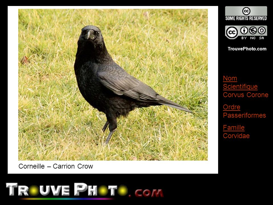 Corneille – Carrion Crow