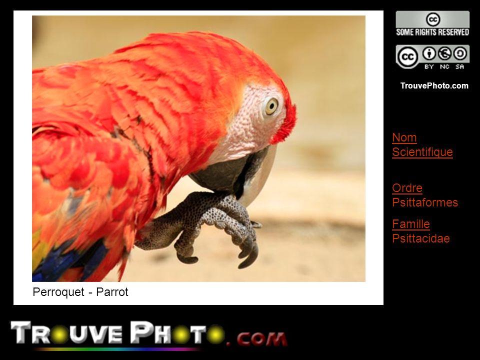 Perroquet - Parrot Nom Scientifique Ordre Psittaformes Famille Psittacidae