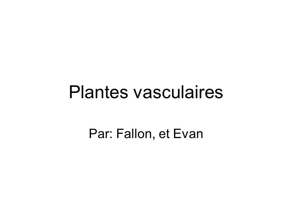 Plantes vasculaires Par: Fallon, et Evan