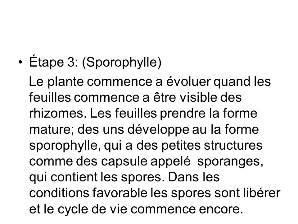 Étape 3: (Sporophylle)