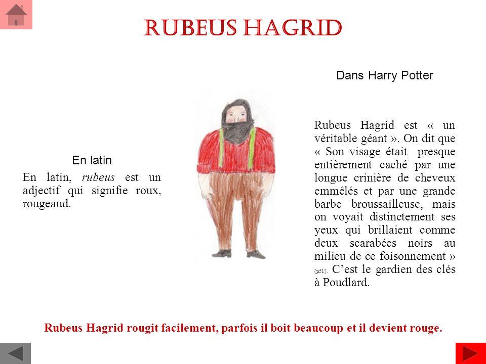 Rubeus Hagrid Dans Harry Potter