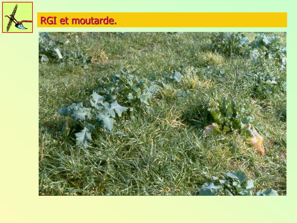 RGI et moutarde.