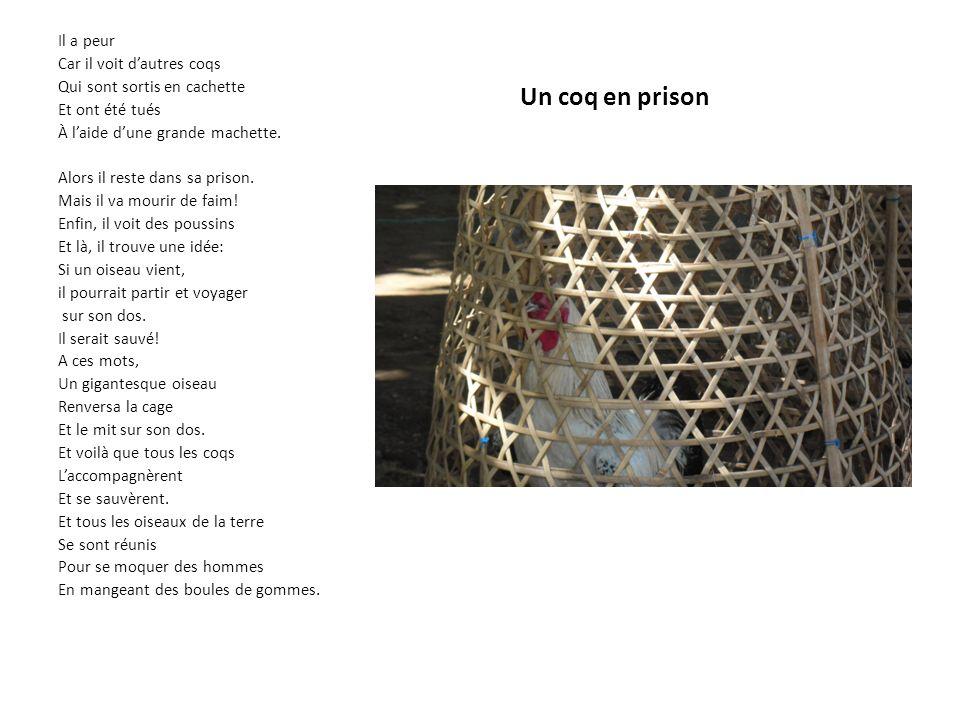 Un coq en prison Il a peur Car il voit d'autres coqs