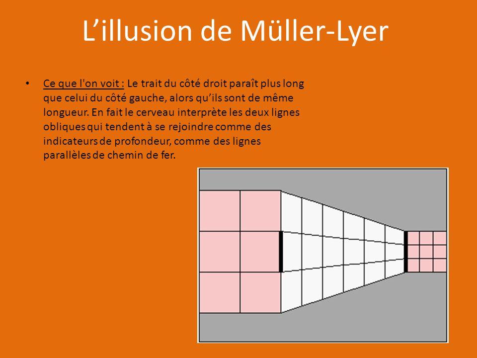 L'illusion de Müller-Lyer
