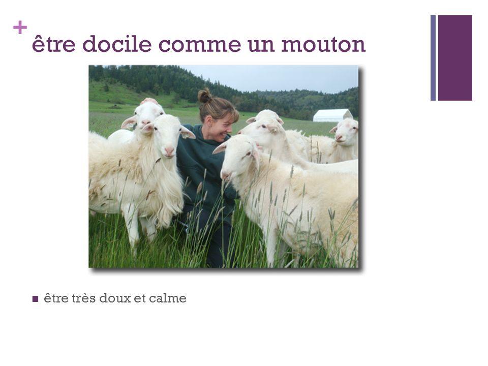 être docile comme un mouton