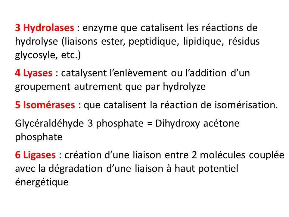 3 Hydrolases : enzyme que catalisent les réactions de hydrolyse (liaisons ester, peptidique, lipidique, résidus glycosyle, etc.)