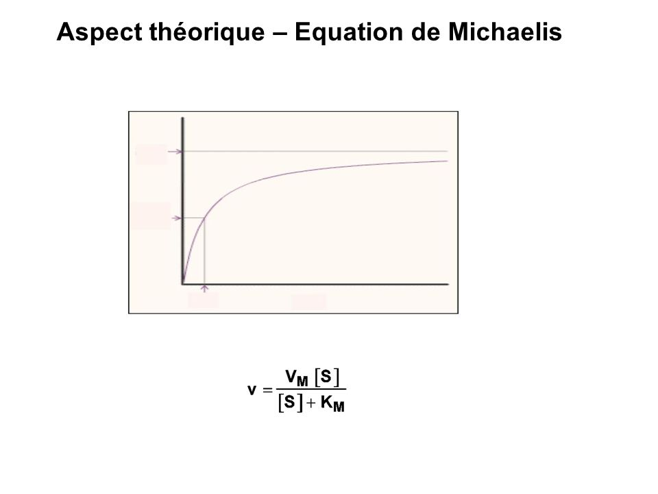 Aspect théorique – Equation de Michaelis