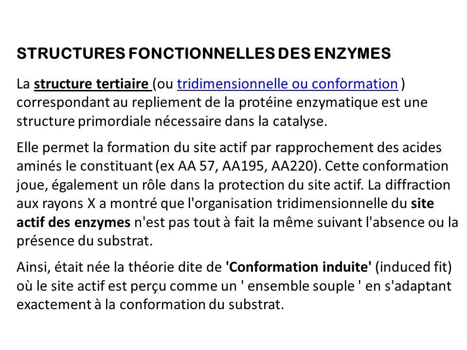 STRUCTURES FONCTIONNELLES DES ENZYMES