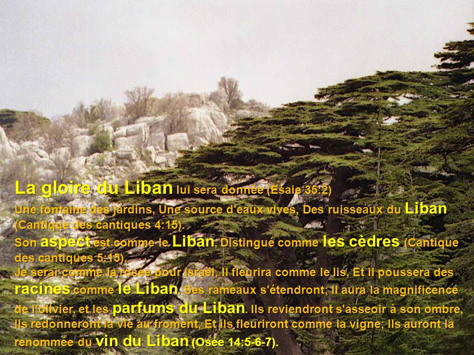 La gloire du Liban lui sera donnée (Esaie 35:2)