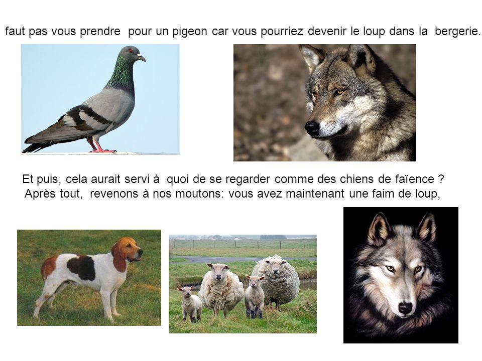faut pas vous prendre pour un pigeon car vous pourriez devenir le loup dans la bergerie.