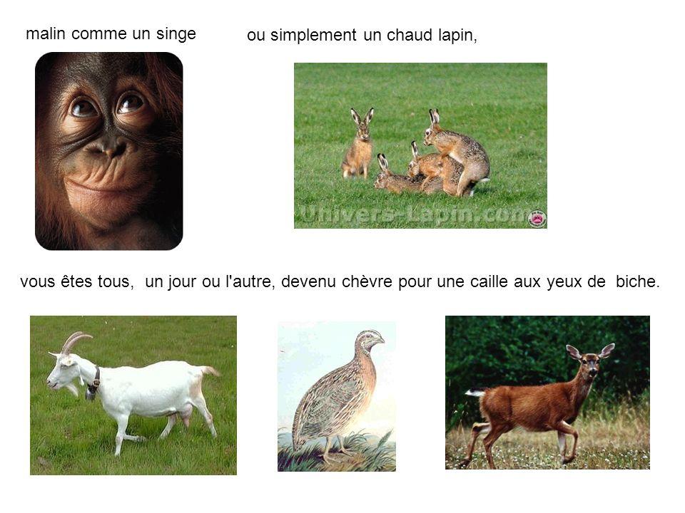 malin comme un singe ou simplement un chaud lapin, vous êtes tous, un jour ou l autre, devenu chèvre pour une caille aux yeux de biche.