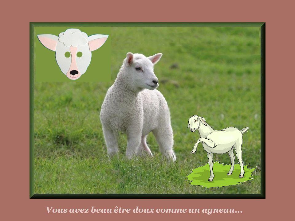 Vous avez beau être doux comme un agneau…