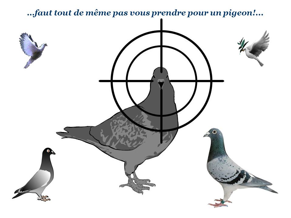 …faut tout de même pas vous prendre pour un pigeon!...