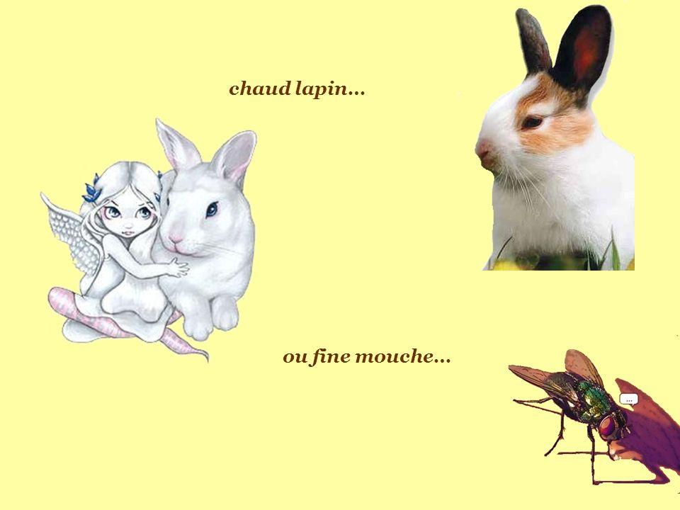 chaud lapin… ou fine mouche…