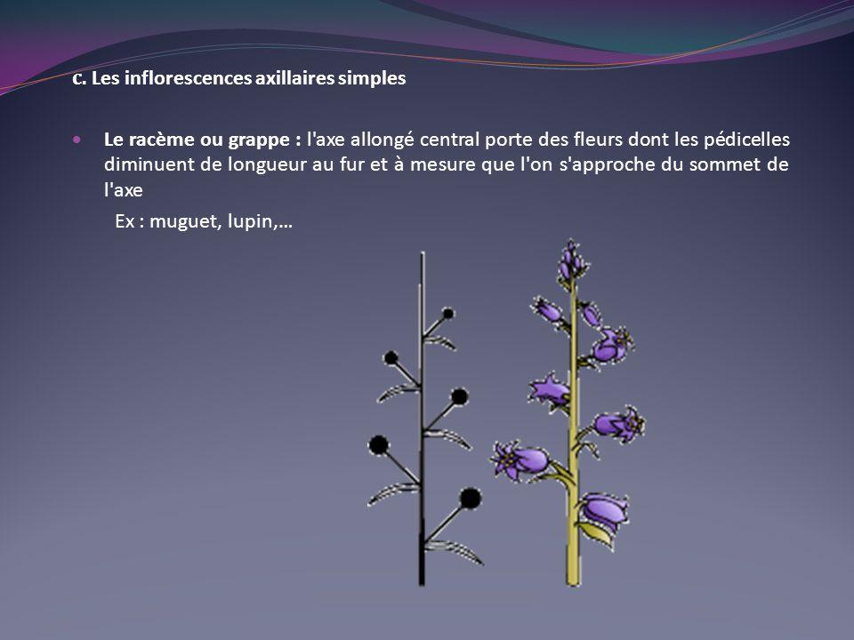 c. Les inflorescences axillaires simples