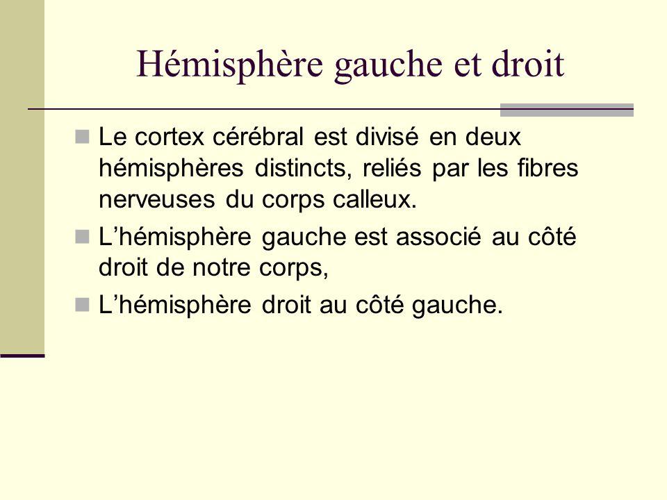 Hémisphère gauche et droit
