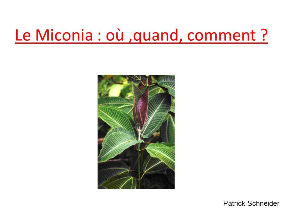 Le Miconia : où ,quand, comment
