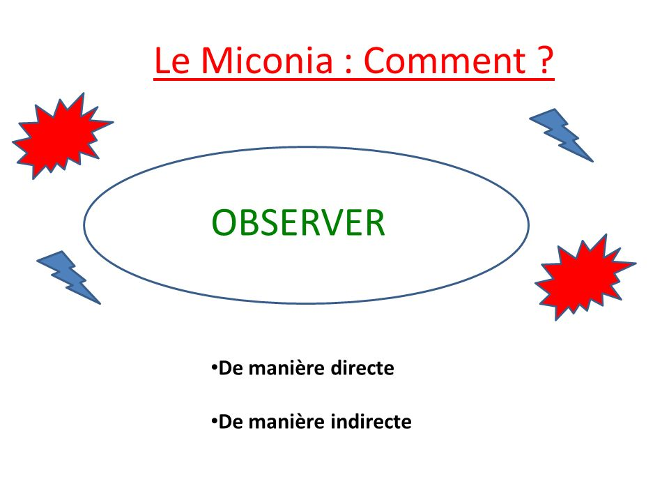 Le Miconia : Comment OBSERVER De manière directe