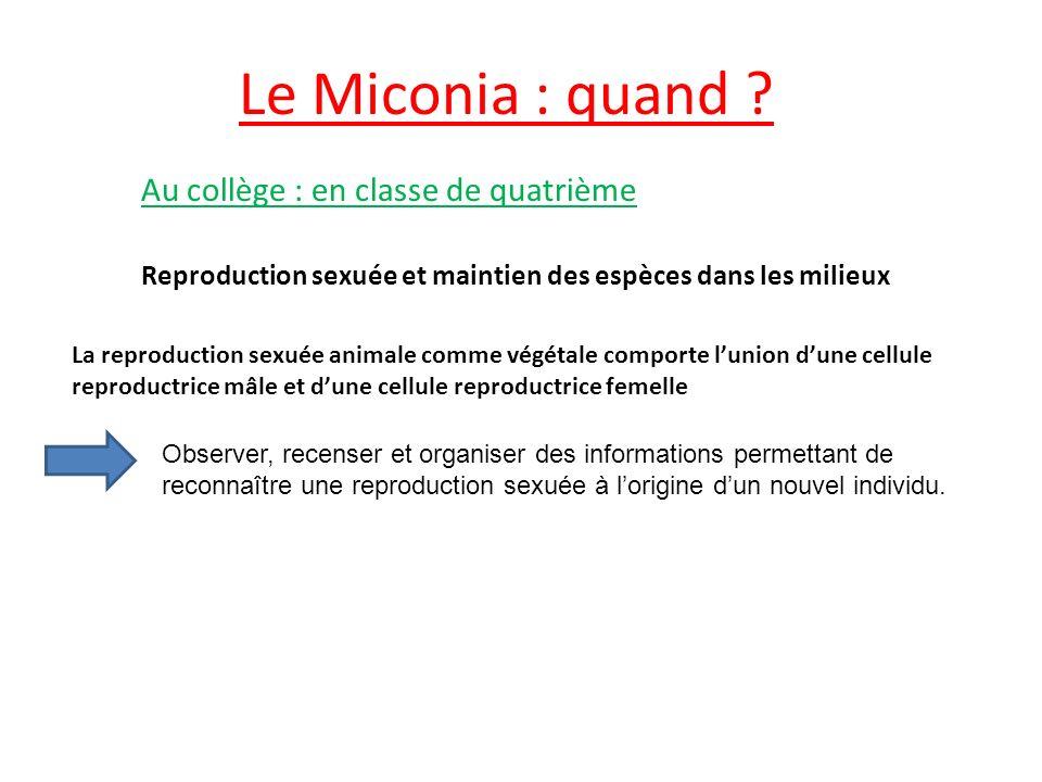 Le Miconia : quand Au collège : en classe de quatrième