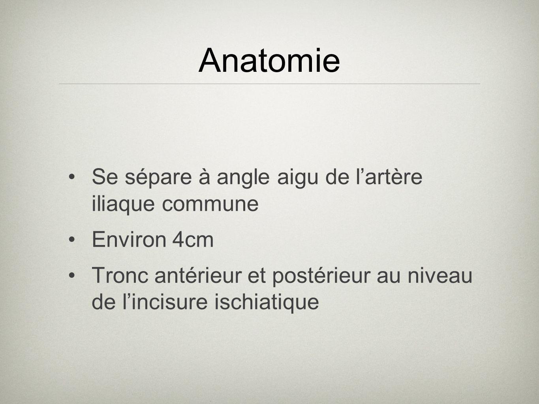 Anatomie Se sépare à angle aigu de l'artère iliaque commune