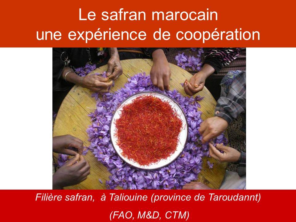 Le safran marocain une expérience de coopération