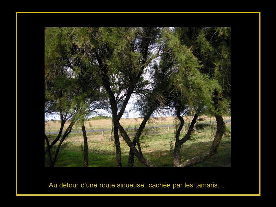 Au détour d'une route sinueuse, cachée par les tamaris…