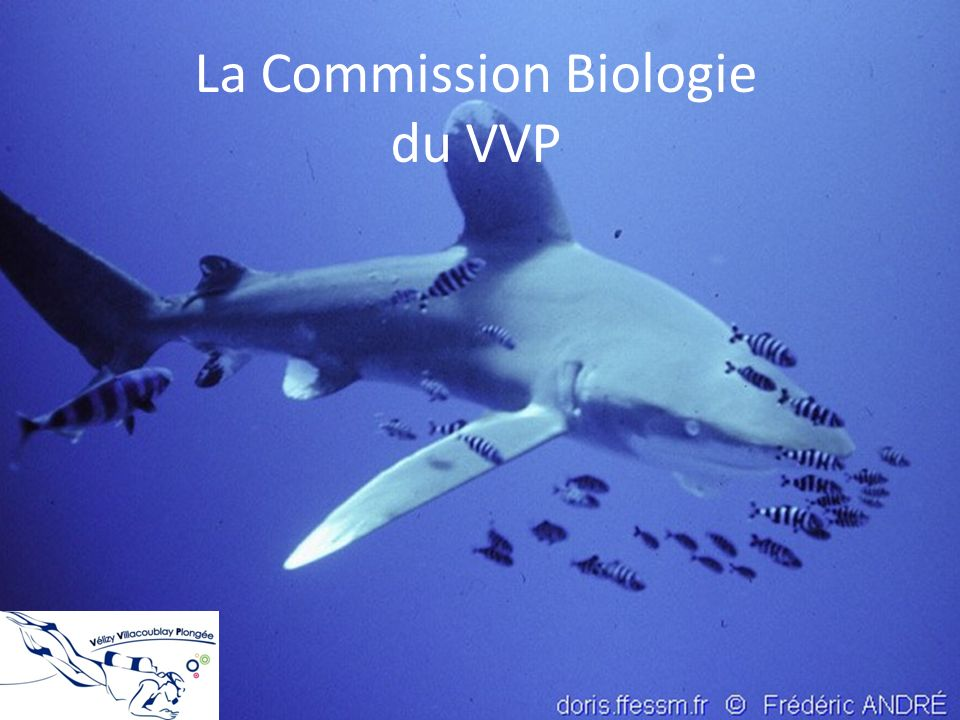 La Commission Biologie du VVP
