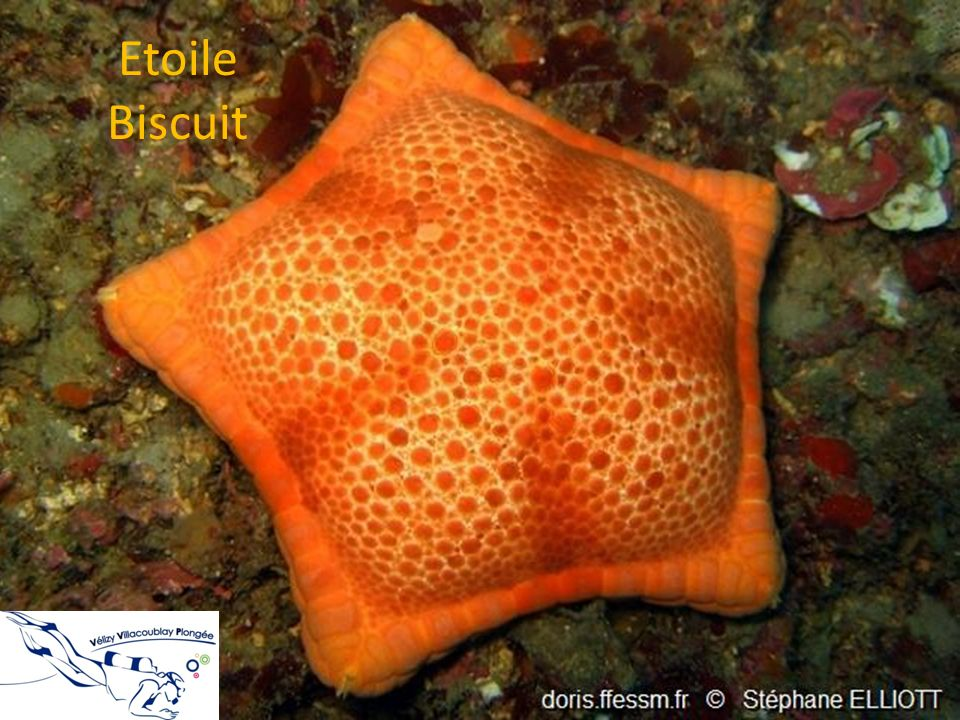 Etoile Biscuit