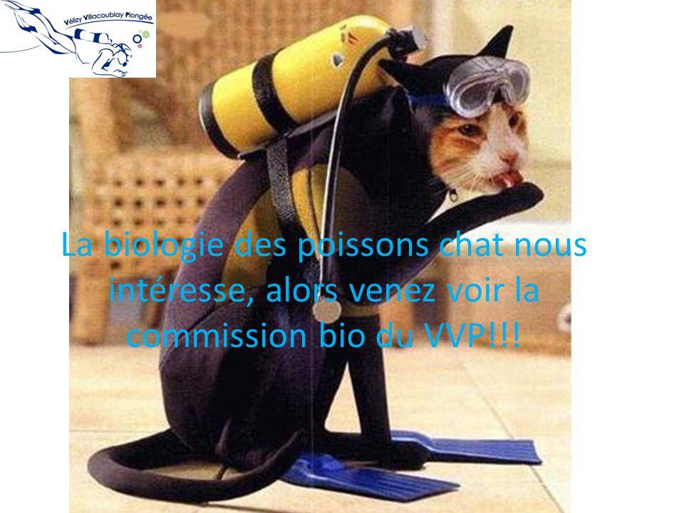 La biologie des poissons chat nous intéresse, alors venez voir la commission bio du VVP!!!