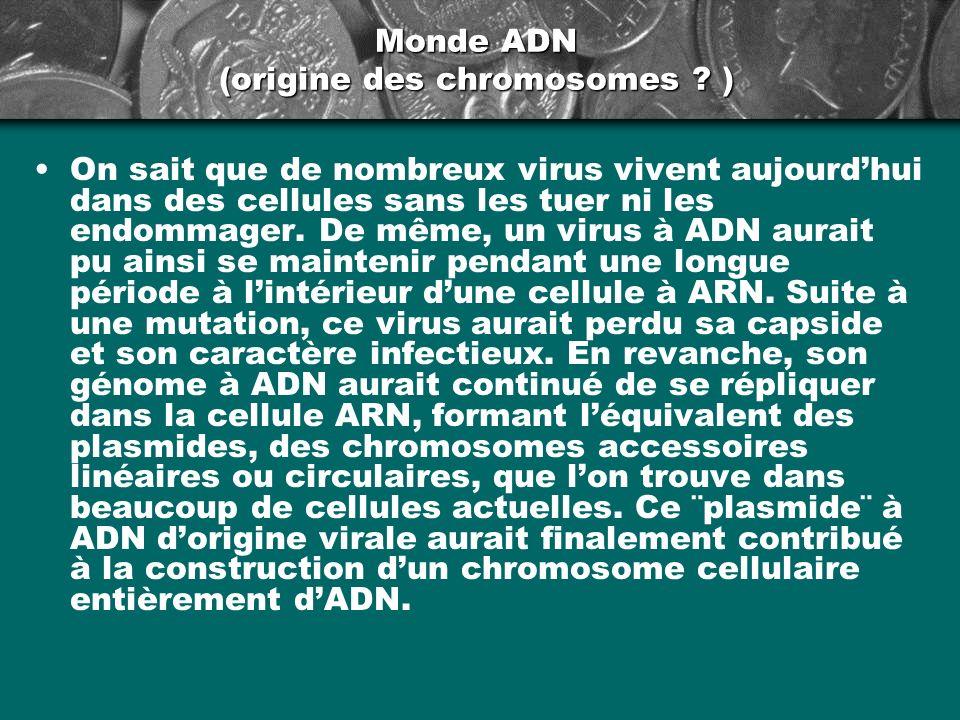 Monde ADN (origine des chromosomes )