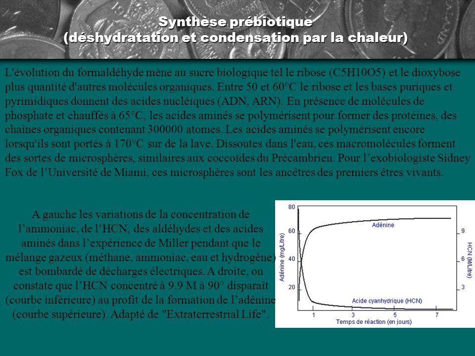 Synthèse prébiotique (déshydratation et condensation par la chaleur)