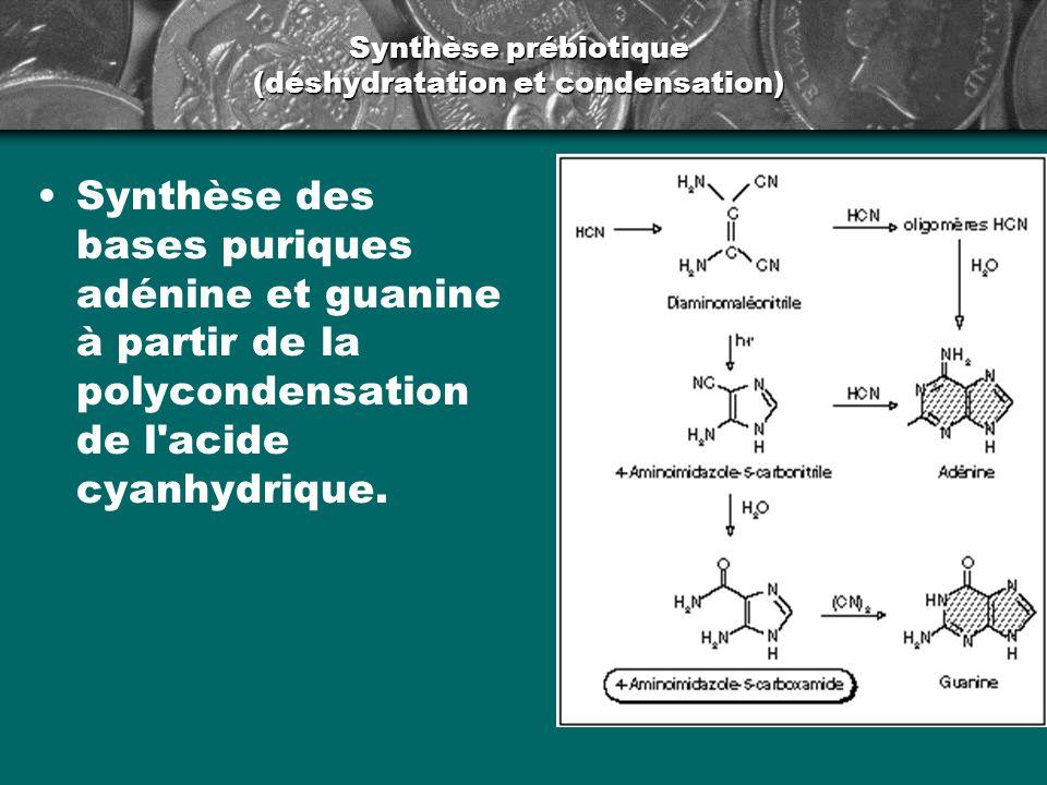 Synthèse prébiotique (déshydratation et condensation)