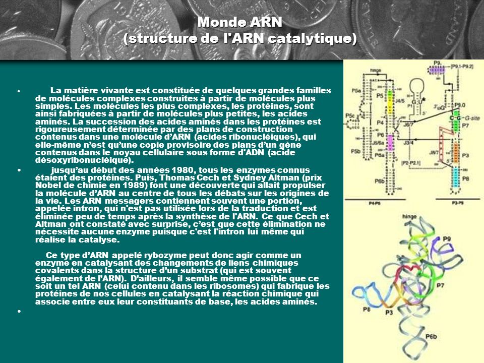 Monde ARN (structure de l ARN catalytique)