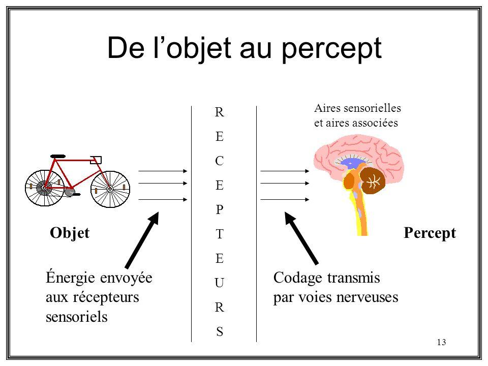De l'objet au percept Objet Percept