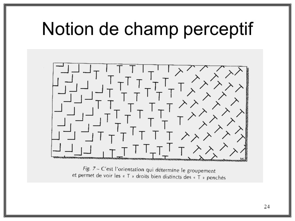 Notion de champ perceptif