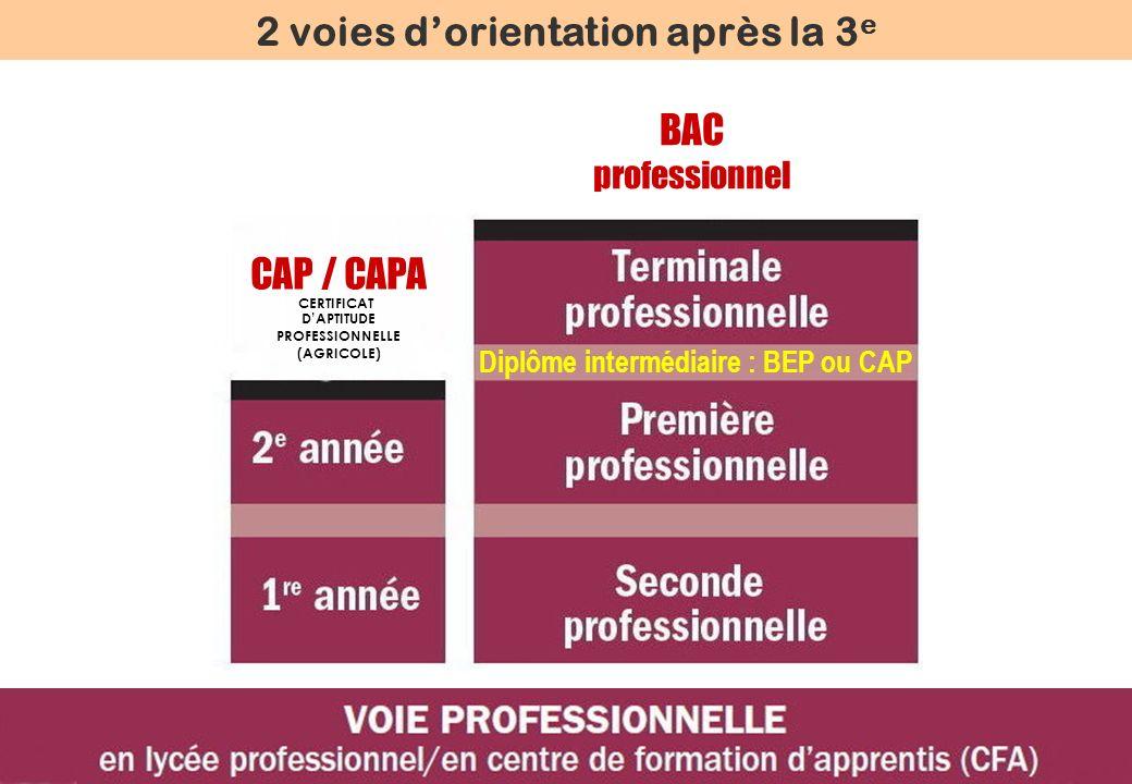 Diplôme intermédiaire : BEP ou CAP