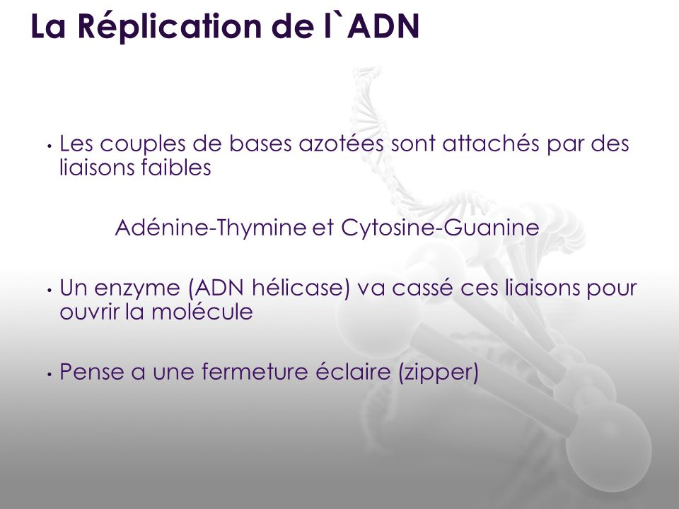 La Réplication de l`ADN