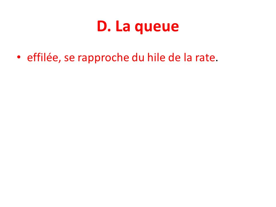 D. La queue effilée, se rapproche du hile de la rate.