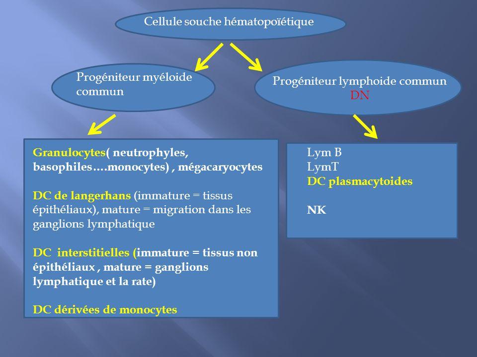 Progéniteur lymphoide commun DN