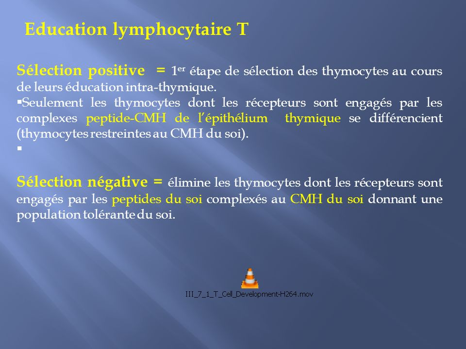Education lymphocytaire T