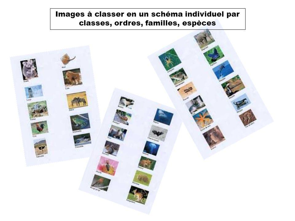Images à classer en un schéma individuel par classes, ordres, familles, espèces